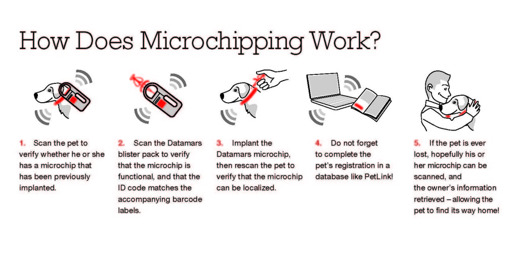 How-Does-Microchipping-Work_Web2